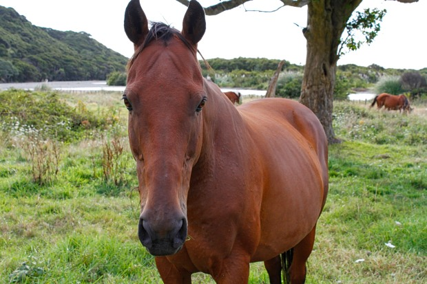 You're guaranteed to come away with horse photos when you visit the East Cape