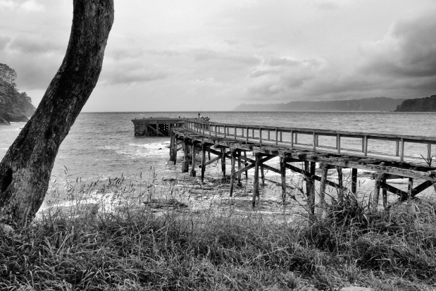 The Hicks Bay wharf opened in 1925 and stayed in use until the 1950s.