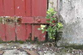 Old Gisborne Gaol