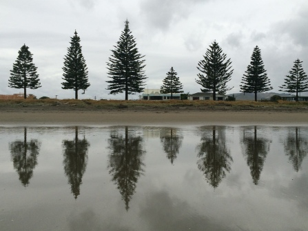 Tree reflections, Waikanae Beach, Gisborne