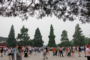 trees by forbidden city north entrance