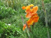 Umm an orange flower