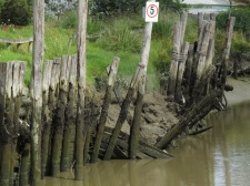 The riverbank reinforcing has seen better days