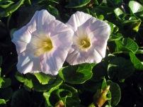 Cutesy coastal flowers