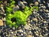 Vivid seaweed