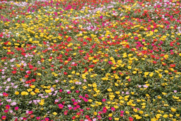 flowers, people's square, shanghai