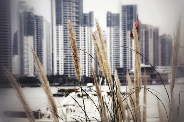 tall grass, the bund