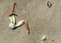RIP crab