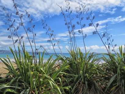 flax, woolley's bay