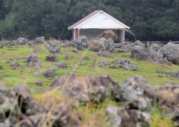 stones in paddocks at glenbervie
