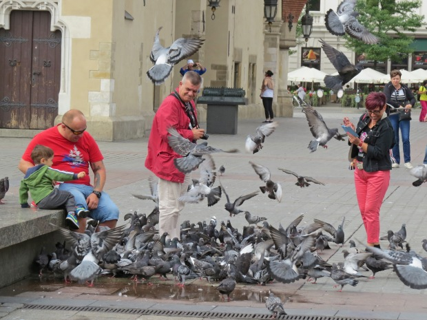 The pigeons are a menace!