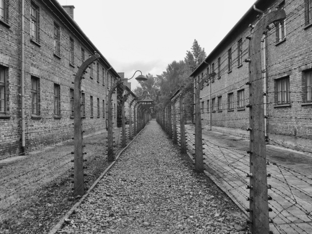 Auschwitz between the fences