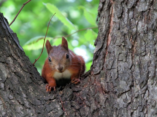 I couldn't believe it when I saw this guy! I was convinced that given my observations in the Planty (the park near my hotel) that Kraków was home only to feral pigeons, pooping dogs and the odd stray cat - but here's proof that at least one squirrel lives here too