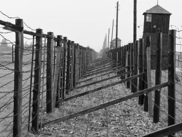 Also double barbed-wire and electrified fences