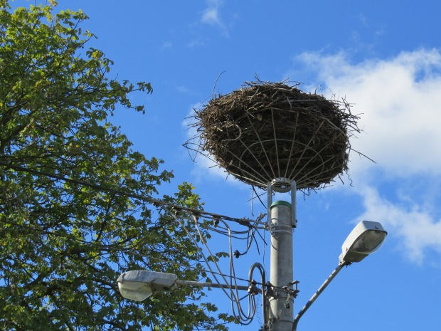 I wouldn't have noticed this had it not been pointed out: a huge nest belong to the white stork. They resort to telegraph poles if they can't find a suitable nesting place elsewhere. To mitigate the electrocution risk, platforms have been installed at the top of poles (by Poles :) ). Every autumn the storks flap off to warmer climes hence this nest is empty