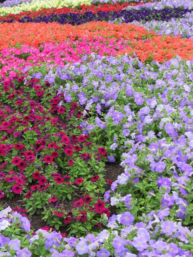 Hyde Park flower gardens