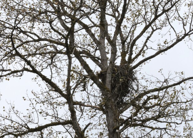 Some non-bear photos from our river drift tours: We saw an eagle's nest...