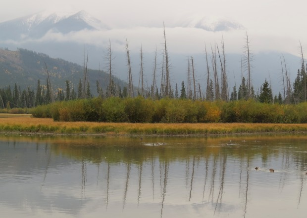 We were lured to the Vermilion Lakes scenic drive as its a supposed wildlife viewing hotspot.